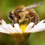 В Украине за гибель пчел хотят ввести огромные штрафы и уголовный срок