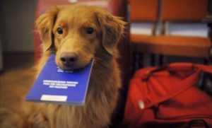 В Киеве животных будут бесплатно вакцинировать против бешенства